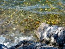 Flotteurs de feuillage dans l'eau de ruisseau claire image libre de droits