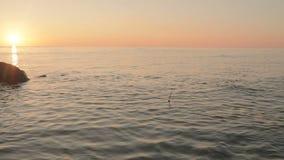Flottez avec les flotteurs faits main d'une plume d'oiseau en mer et pêchez des poissons banque de vidéos