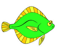Flounder Royalty Free Stock Photos