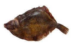 flounder Стоковые Фото