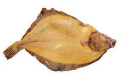 flounder Стоковая Фотография RF