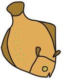Flounder Stock Photos
