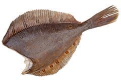 Flounder carcass without the head Royalty Free Stock Images