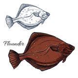 Flounder fish, ocean flatfish isolated sketch. Flounder fish sketch. Ocean flatfish, predatory marine animal isolated sign for seafood menu, sea fishing or fish Royalty Free Stock Image