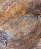 Flounder Fish Scales Texture Closeup Stock Images