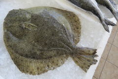 Flounder plaice, flatfish, Scholle, Flunder. S from Adriatic sea in the fish shop in Bar-city, Montenegro Stock Images