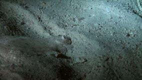 Flounder on the sandy bottom of Red Sea at night. stock footage