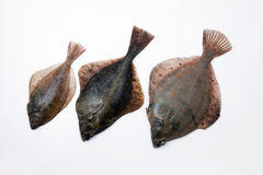 Flounders Royalty Free Stock Photos