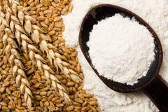 flour пшеница Стоковое фото RF