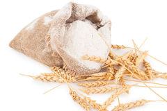 Flour in burlap bag with wheat ears Stock Image