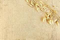 Flour oat with stem Stock Photos
