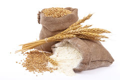 Flour and wheat grain Stock Image