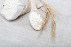 Flour and wheat grain. Flour and wheat grain on sackcloth Stock Images