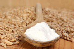 Flour on a wooden spoon and grain Stock Photography