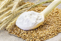 Flour in the wooden spoon with grains and ears Stock Photography
