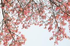 flourish цветет капок стоковое изображение
