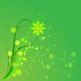 Flourish Backgrounds. Illustration of flourish backgrounds is isolated on green backgrounds stock illustration