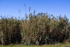 Flourish bamboo background against blue sk Stock Photo