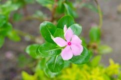 Flourish de beaucoup de fleurs Photographie stock libre de droits