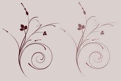 Flourish decorativo Fotos de Stock