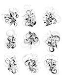Flourish design elements. Set of flourish design elements with reflections Royalty Free Stock Images