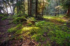 Flourish Forest. A flourish forest in Western Finland stock image