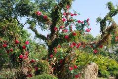 Flourish garden Stock Photos