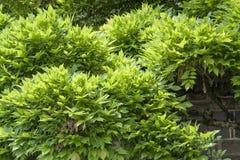 Flourish plant Stock Images