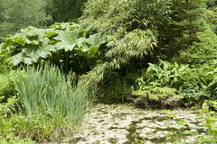 Flourish vegetation. Seen in Huelgoat, Brittany, France Royalty Free Stock Photography