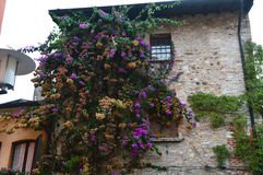 Flourished house in Sirmione, Garda Lake, Italy. Beautiful flourished house in Sirmione, Garda Lake, Italy Royalty Free Stock Photography