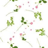 flourishing розовые розы безшовные Стоковое Фото