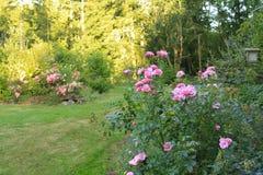 Flourishing farm backyard Stock Photo