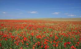 Flourishing field Royalty Free Stock Image