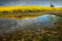 Flourishing Field royalty free stock photos