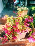 Flourishing flower. Of nature royalty free stock photography