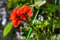 Flourishing flowers in my garden royalty free stock photo
