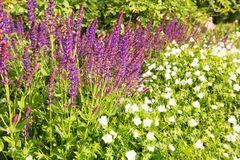 Flourishing flowers to wade. / spring royalty free stock photos