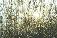 Flourishing forest in sunlight. Vintage look. Flourishing forest in sunlight. Beautiful viws of Latvia. Vintage look Stock Image
