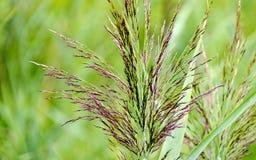 Flourishing grass. At a wet grassland of a high moor stock photos