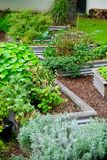 Flourishing Neighbourhood Community Garden. A flourishing Elegant Neighbourhood Community Garden with Flowers, Herbs & Vegetables in Plant Boxes Stock Photo