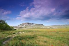 Flourishing steppe Royalty Free Stock Photos