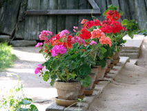 Flours of Geranium on a porch. Village Museum of Bucharest - Beautiful flours of geranium on a porch of a Romanian traditional house Stock Photo