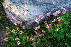 Flouwers весны, Palekh, зона Владимира, Россия Стоковое Фото