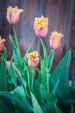 Flouwers весны, Palekh, зона Владимира, Россия Стоковые Фото