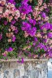 Flouwers на стене Стоковая Фотография