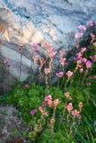 Flouwers della primavera, Palekh, regione di Vladimir, Russia Fotografia Stock