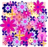 Flover. Flowers are located on a pink background Stock Photos