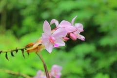 Flover de la orquídea Fotos de archivo