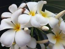 Flover en Tailand fotos de archivo libres de regalías