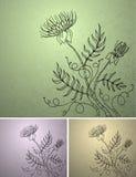 flover fentesi Стоковые Фото